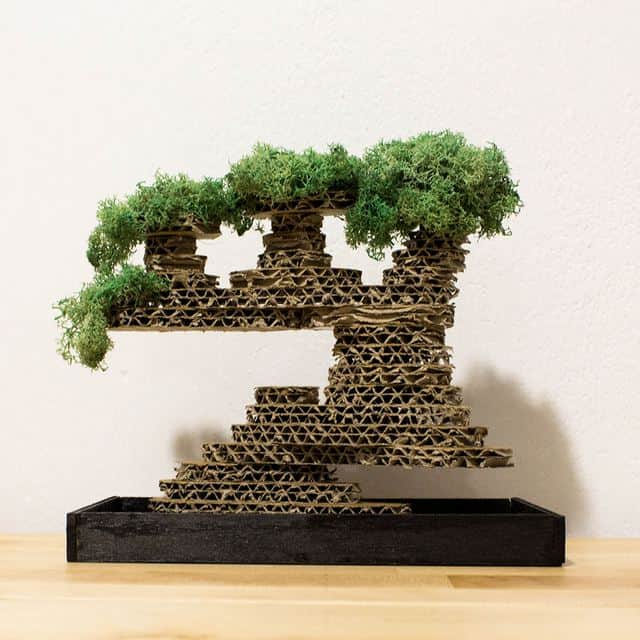 Bonsai in cartone